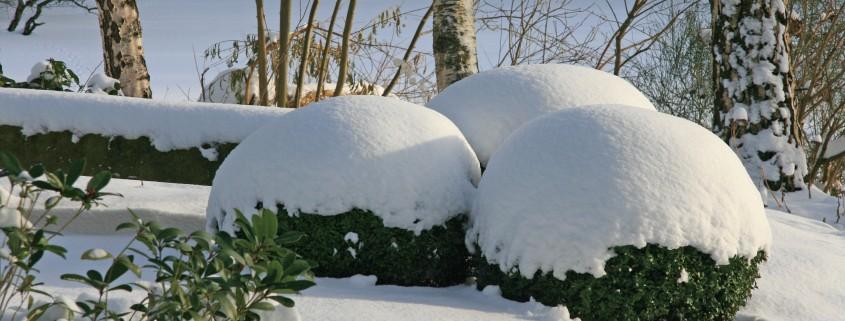 Winterpflege für den Garten