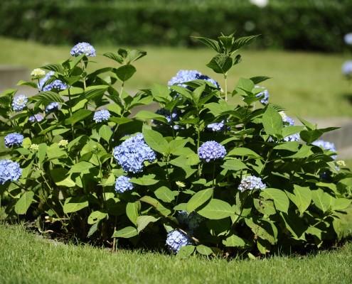 Blumen- und Nutzgarten in Potsdam