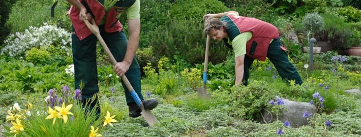 Gärtner für Berlin-Brandebrug pflegen Ihren Garten ganzjährig